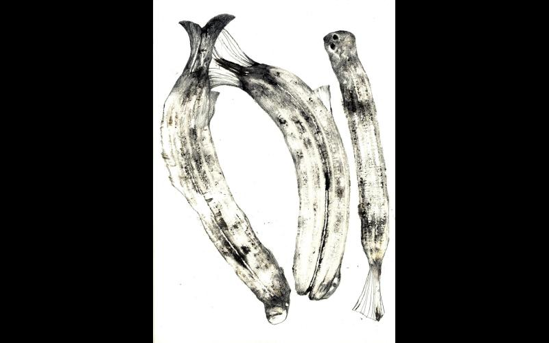 fish & banananas